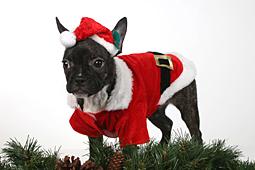 Weihnachten-121-by-FOTO-GALERIE-HOFER