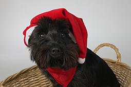 Weihnachten-123-by-FOTO-GALERIE-HOFER